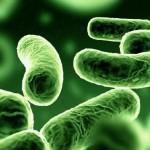 bakteria wywołująca legioneliozę